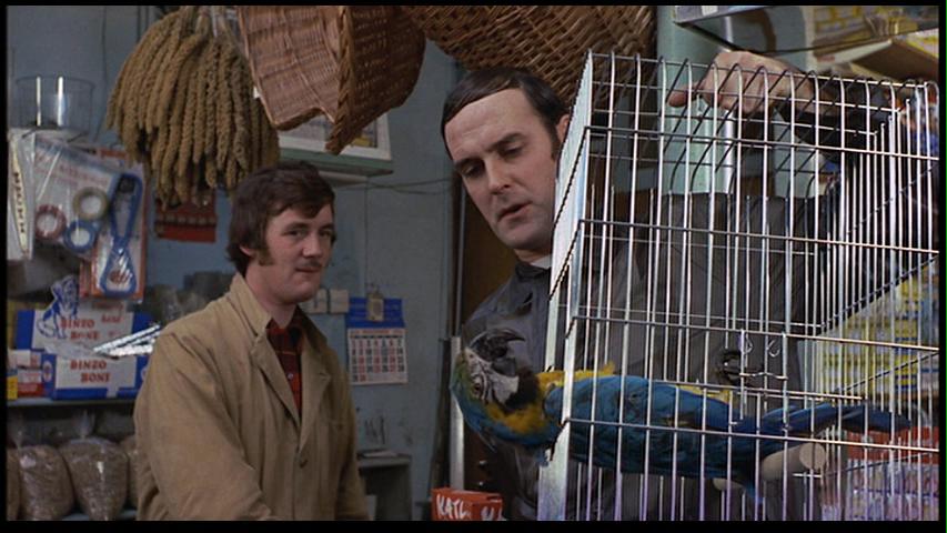 dead-parrot-1